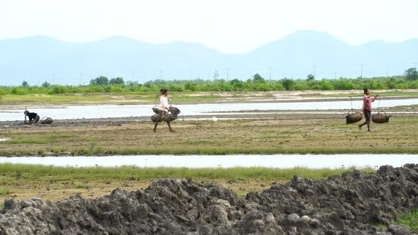 Rice Fields. Hard Work