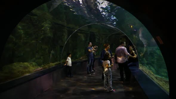 Thumbnail for People At The Oceanarium