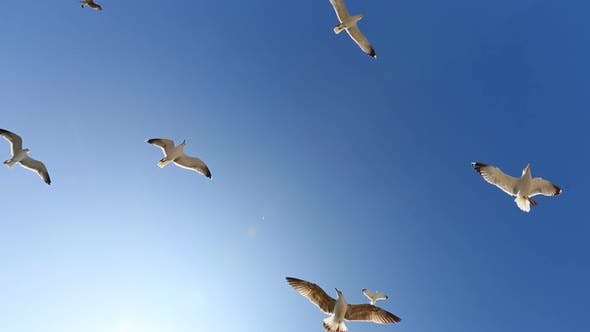 Thumbnail for Many Seagulls Fly Against Blue Sky in Sunny Day