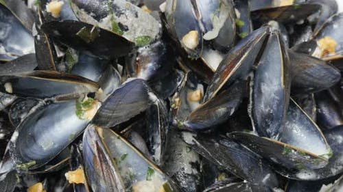 Empty shells of common mussel after meal close-up 4K 2160p 30fps UltraHD footage - Pile of Mytilus e
