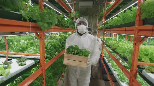 Afro-American Agronomic Engineer In Vertical Farm