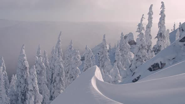 Winter Fir Tree Forest in Mountains
