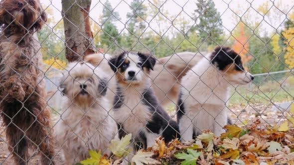 Hunde verschiedener Rassen im Gefängnis Zwinger oder Tierheim