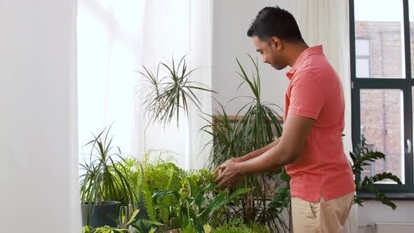 Thumbnail for Indian Man Taking Care of Houseplants at Home