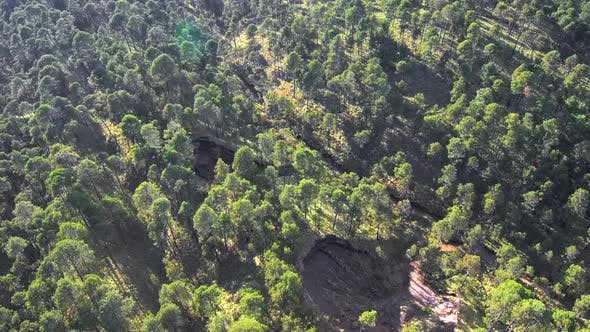 Aerial footage above Mexican forest