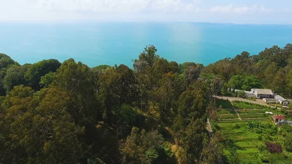 Thumbnail for Green Hillsides of Botanical Garden in Batumi Georgia with Black Sea at Back
