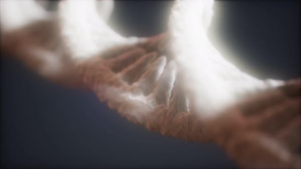 Loopable Structure of the DNA Double Helix