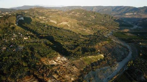 Olive Oil Land