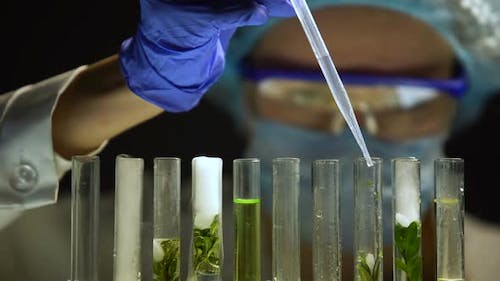 Biologist Adding Nitrogen in Tubes With Green Plants, Preservation Experiment