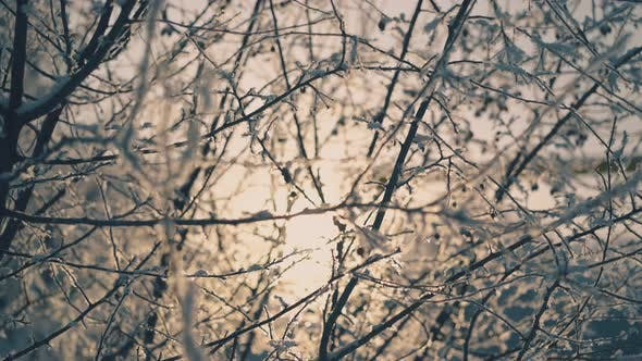 Cover Image for Motion Past Branches with Frost and Little Berries in Winter