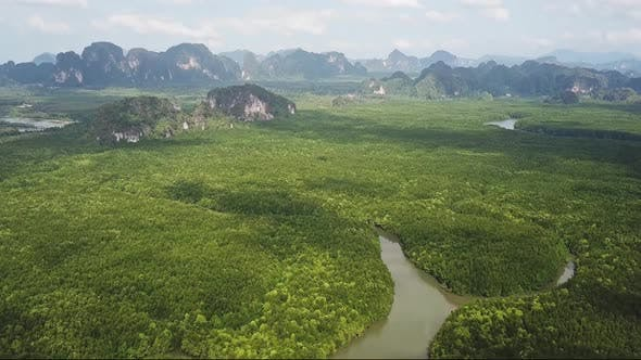 Thumbnail for Aerial Top View on River Between Mangrove Forest