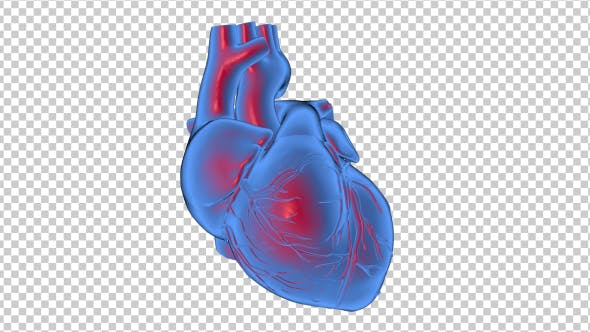 Thumbnail for 3D Beating Heart - 2 Scene