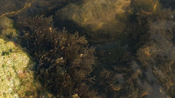 Thumbnail for Rocks With Seaweeds And Waves In Sea