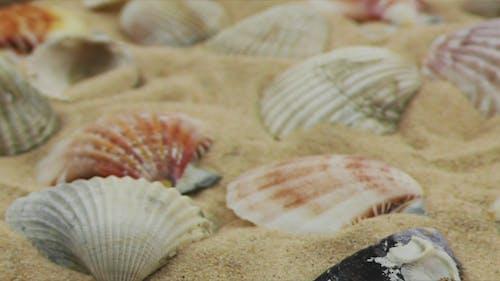 Sea Creatures 7