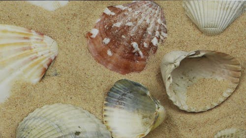 Sea Creatures and Shellfish 3