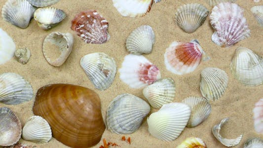 Thumbnail for Seashells on Sand 1