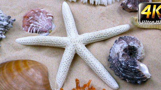 Thumbnail for Starfish and Seashells on Sand 2