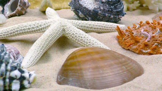 Thumbnail for Starfish and Seashells on Sand 7