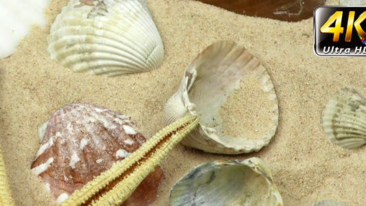 Thumbnail for Starfish and Seashells on Sand 9