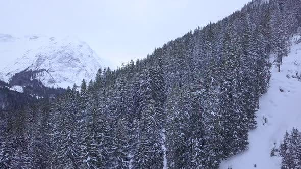 Thumbnail for Aerial drone view of trees and a forest in the snow covered mountains.