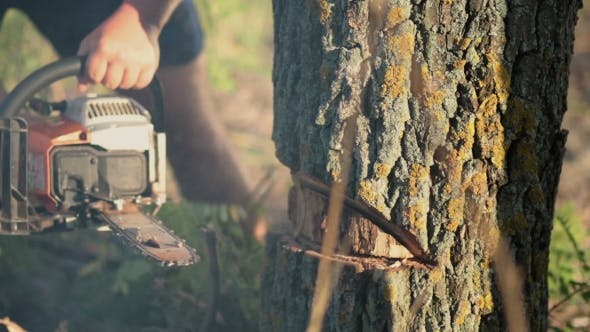 Thumbnail for Man Sawing a Dry Tree With Chainsaw