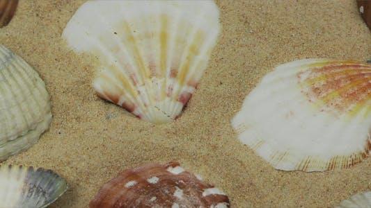 Sea Creatures and Shellfish 9
