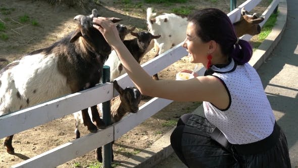 Thumbnail for Girl Feeding Baby Goats In Zoo