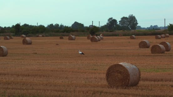 Thumbnail for Aerilal Shot Field With Straw Bales Under Sunset Sky