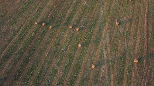 Thumbnail for Harvesting, Flying Over The Cleared Field. Aerial shot, Combine Harvested Fields With Baling Hay.