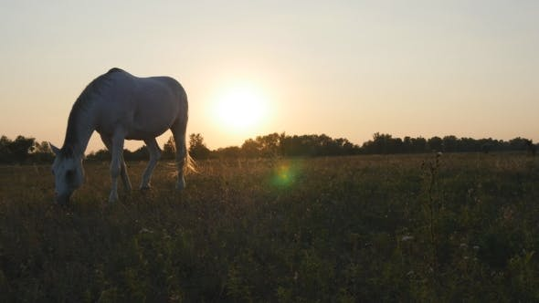 Thumbnail for Horse Grazing on the Meadow at Sunrise