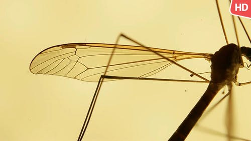 Insect Analysis 0591