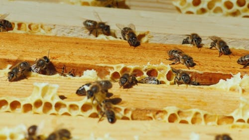 Bees Work On The Framework With Honey Top View