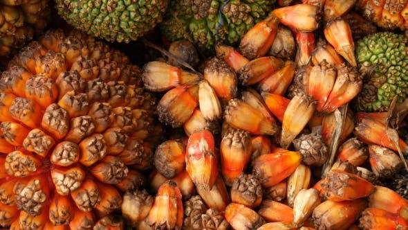 Thumbnail for Palm Fruit_02