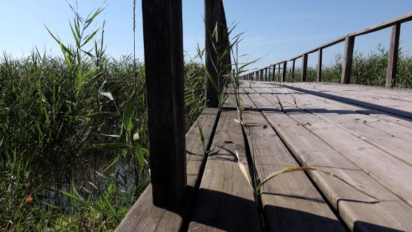 Thumbnail for Bridge Through The Reeds On The Lake