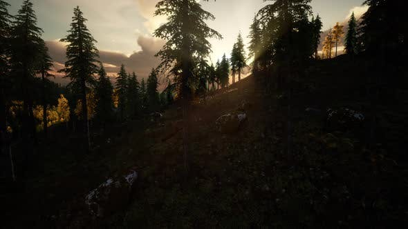 Thumbnail for Summer Forest in Mountain Landscape