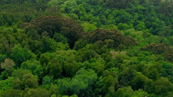 Mountain Peak at Green Grass Forest Aerial Closeup