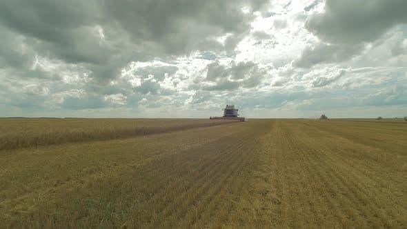 Thumbnail for The harvest season