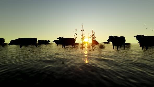 Thumbnail for Buffalo Herd Walking in Reeds