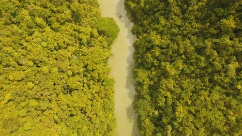 River in Rainforest Philippines, Bohol