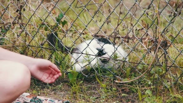 Thumbnail for Cat In The Grass Playing With a Person