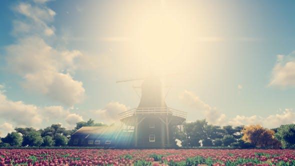 Thumbnail for Windmill - Tulip Farm - Holland