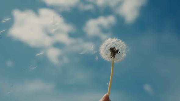 Thumbnail for Girl Blowing On a Dandelion On a Sky Background