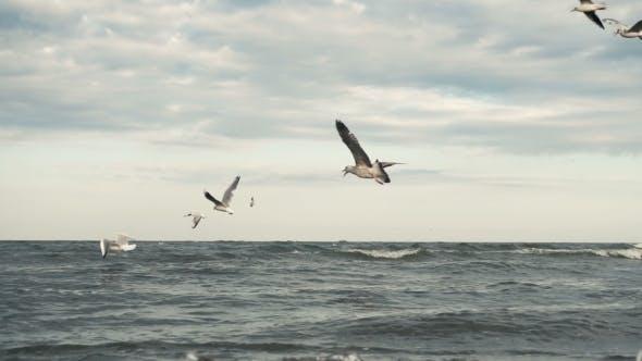 Thumbnail for Seagulls At The Sea Coastline Beach