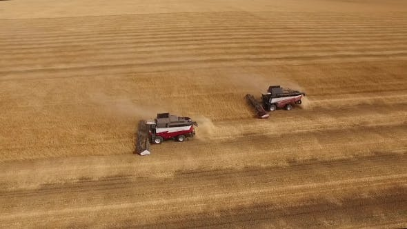 Thumbnail for Two Combine Are Harvesting Wheat, Aerial Shot, Camera Showing Panorama Of Golden Field