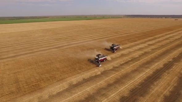Thumbnail for Drone Flying Around Two Smoking Combine Are Harvesting Wheat On Golden Field In Summer Day