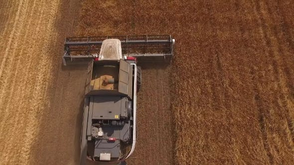 Thumbnail for Drone Flying Up Over Two Modern Harvester Working On a Field With Grain Golden Rye