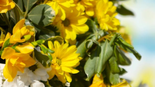 Thumbnail for Yellow Flowers And Balloons Are In The Yard