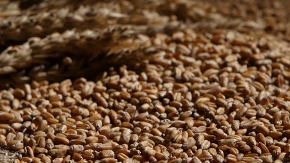 Thumbnail for Wheat Grains Agricultural Crop Harvest