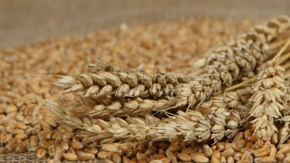 Cover Image for Falling Grains Of Wheat.