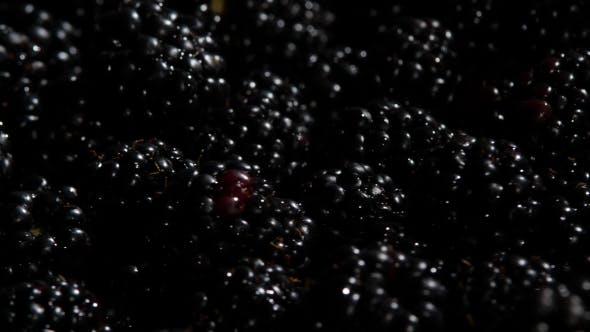 Thumbnail for Blackberry Fruit Rotating